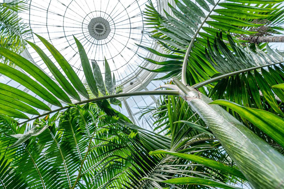 Upward shot of large skylight dome with lush greenery framing the photo.