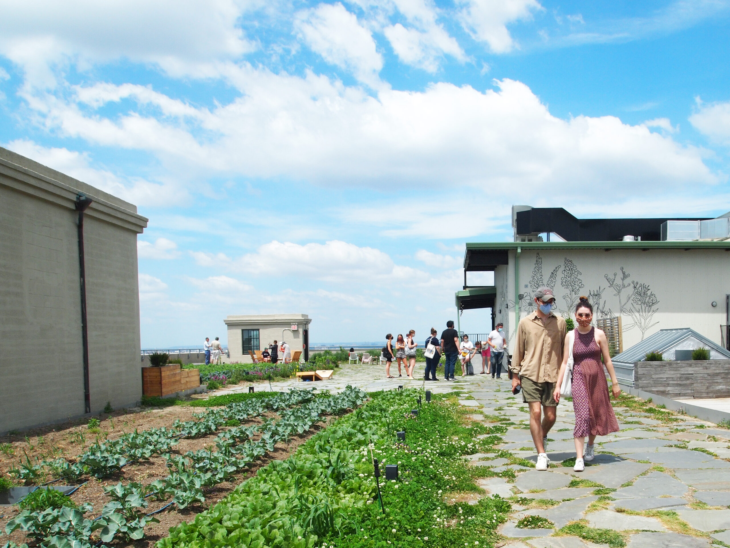 Image of the rooftop farm