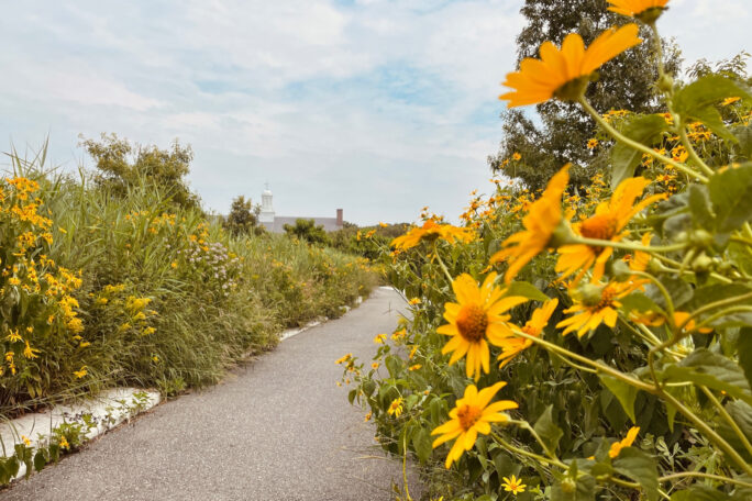 A walking path on Governors Island