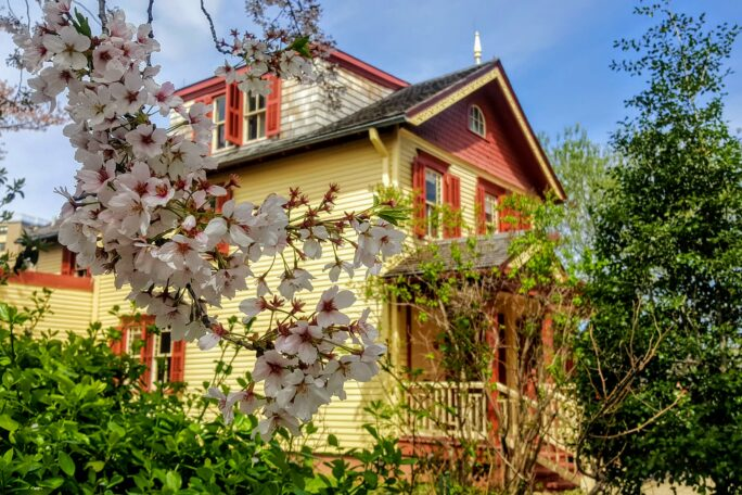 Image of a Queen Anne style wood frame house painted yellow with red trim. Cherry blossoms from the garden are in the foreground.